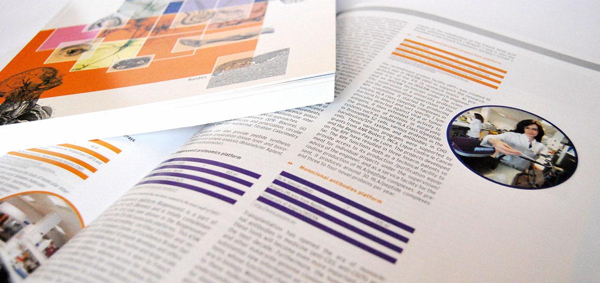 Infographiste indépendant, création et mise en page de rapports d'activité, science immunologique